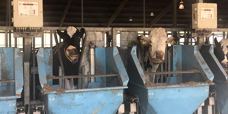 Der Digitale Stall automatisiert das Smart Farming.