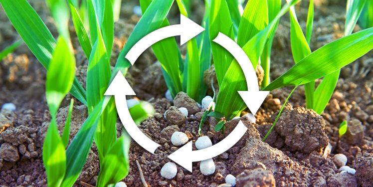 Nachhaltigkeit in der Landwirtschaft (Nährstoffkreislauf)