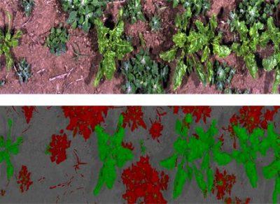 Spektralsensoren kommen u. a. als neue Sensor-Technologien beim Smart Farming zum Einsatz.